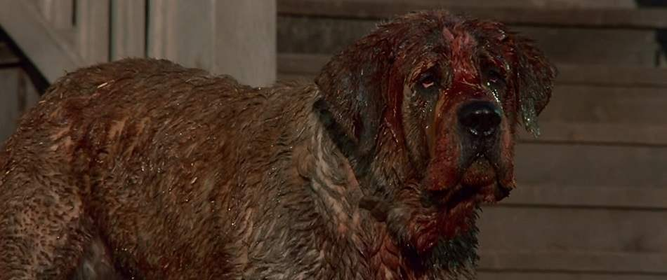 The killer dog from 1983's Cujo.