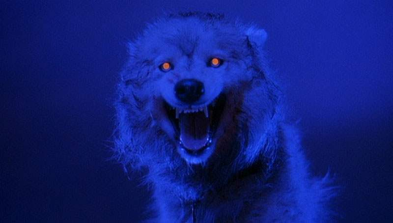 Zowie in Pet Sematary Two
