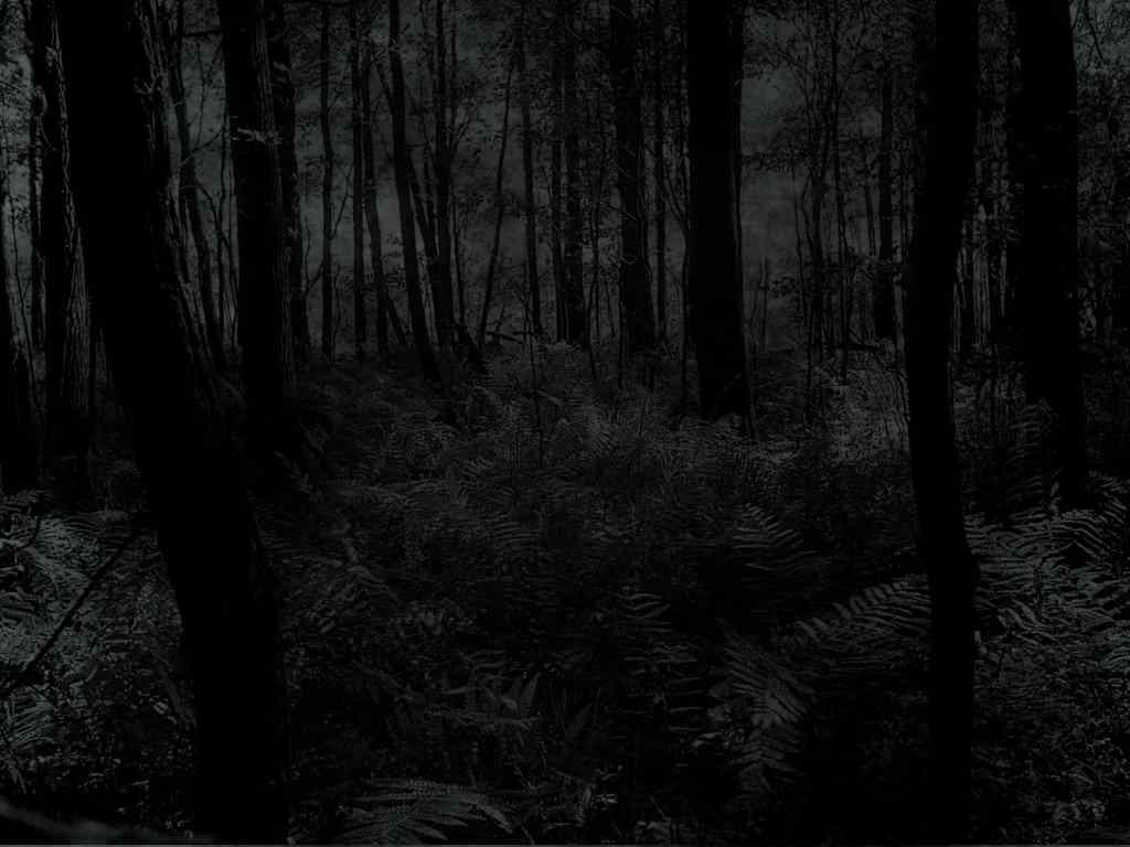a scary forest in the middle of the night.