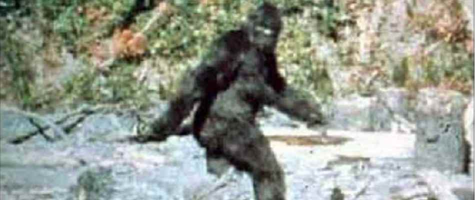Bigfoot as seen in the famous Patterson-Gimlin film