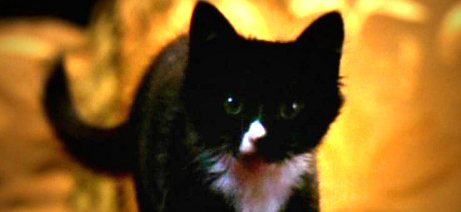 Miss Kitty Fantastico in Buffy