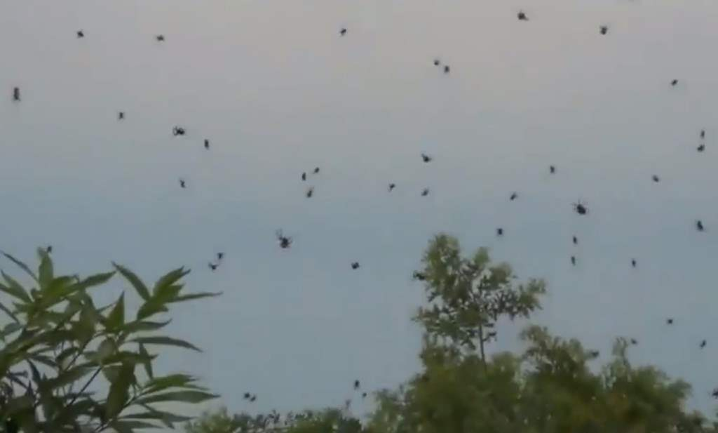 Baby spiders fall from the sky in Australia.