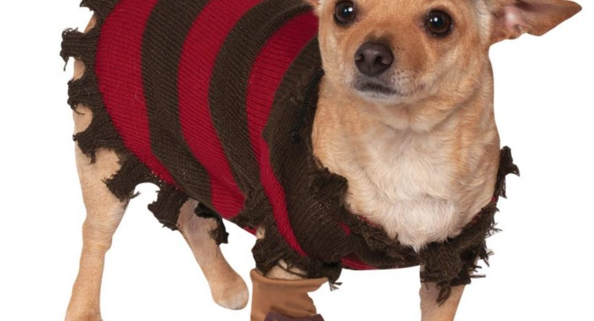 Freddy Krueger Dog Costume
