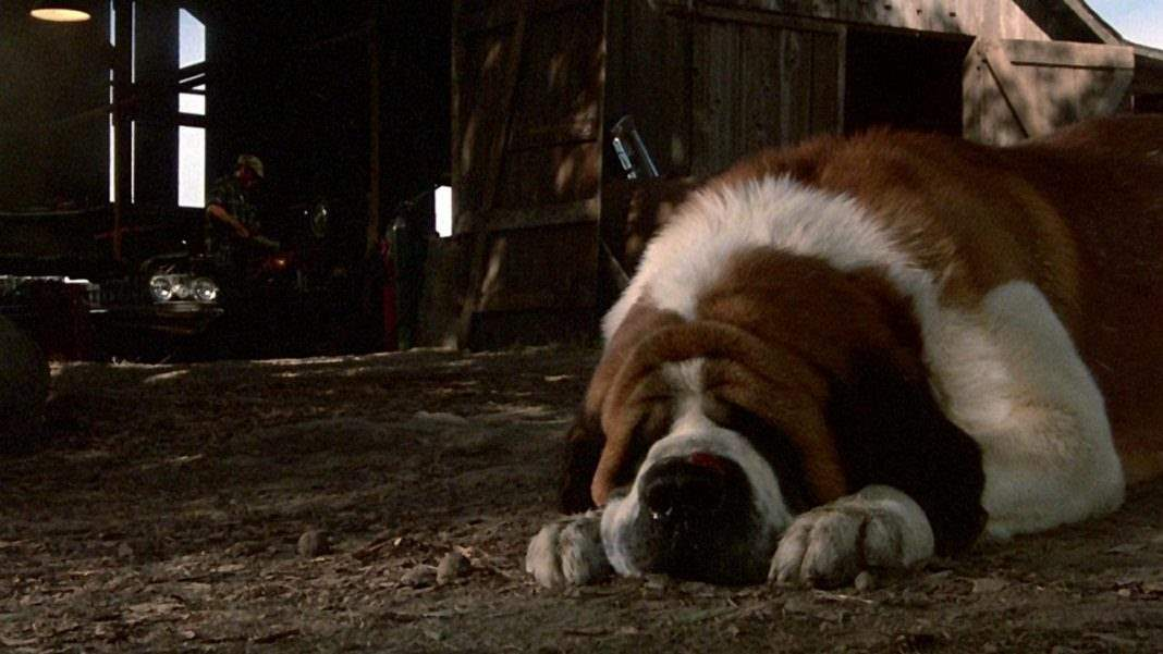 Cujo - Ranking every Stephen King Movie